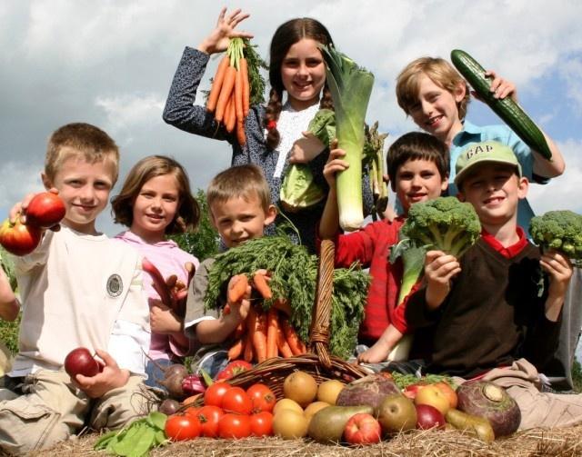 Дети предпочитают овощи и фрукты летом