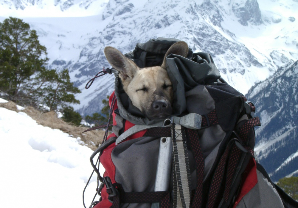 Рюкзак поход рюкзак для пикника camping world