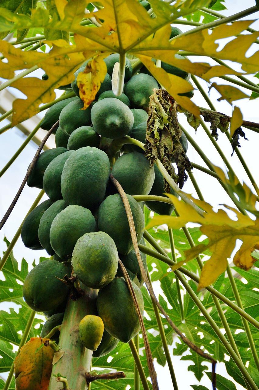 экзотическая папайя