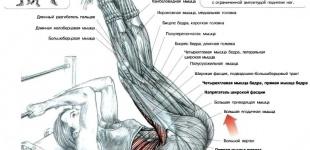 Мои любимые упражнения: подъем ног на наклонной скамье