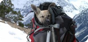 Как правильно собрать рюкзак в поход? Список вещей для похода